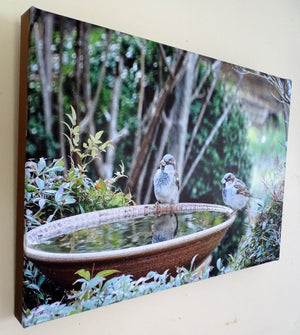Photo on Canvas - Sparrows on Bird Bath