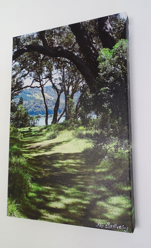 Original Photo on Canvas - Wenderholm through the Pohutukawa trees