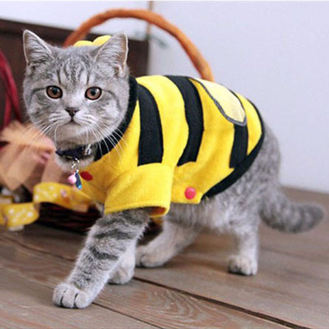 Bumble Bee Cat Costume - My Bengal Boy