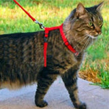 Cat Harness and Leash - My Bengal Boy