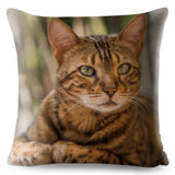 Cat Cushion - Lunani's Fashion Book | Fashionable and reasonable dresses and shoes!