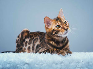Bengal Cat Canvas