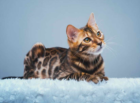 Bengal Cat Canvas - Lunani's Fashion Book | Fashionable and reasonable dresses and shoes!
