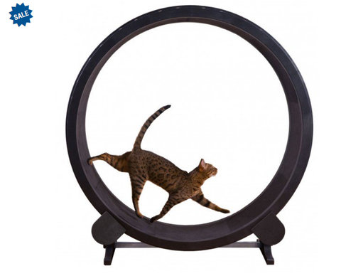 Cat Exercise Wheel - Lunani's Fashion Book | Fashionable and reasonable dresses and shoes!
