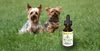 CBD oil for dogs – Hemp hype or doggie dream?