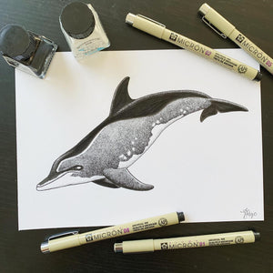 Rough Toothed Dolphin illustration Original