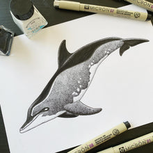Load image into Gallery viewer, rough toothed dolphin scientific iullustration