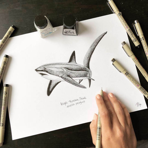 Pelagic Thresher Shark Ink Original