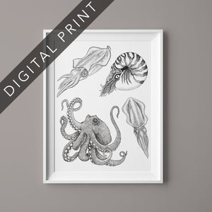 octopus nautilus squid illustration stippling