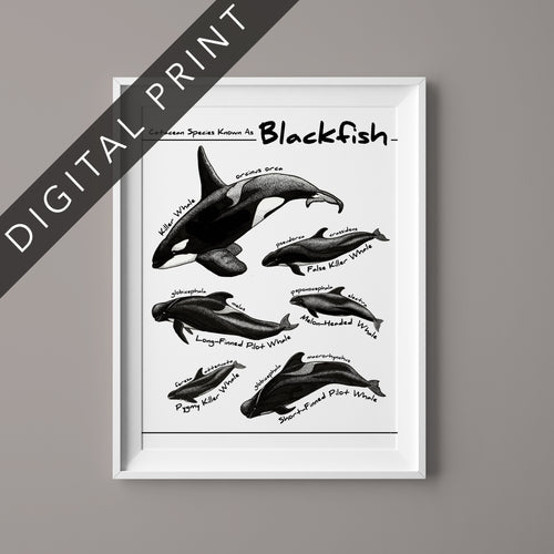 Blackfish Digital Print