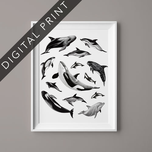 Earth Day Dolphins Digital Print