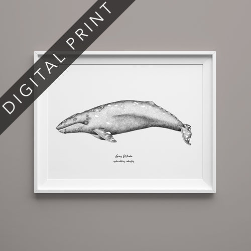 Gray Whale Digital Print