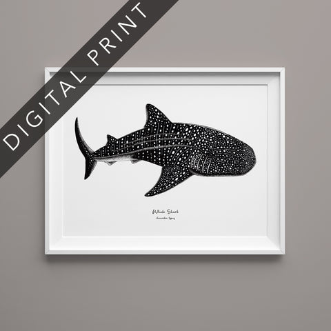 Whale Shark Digital Print