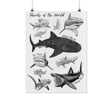 Load image into Gallery viewer, Sharks of the World Poster Print