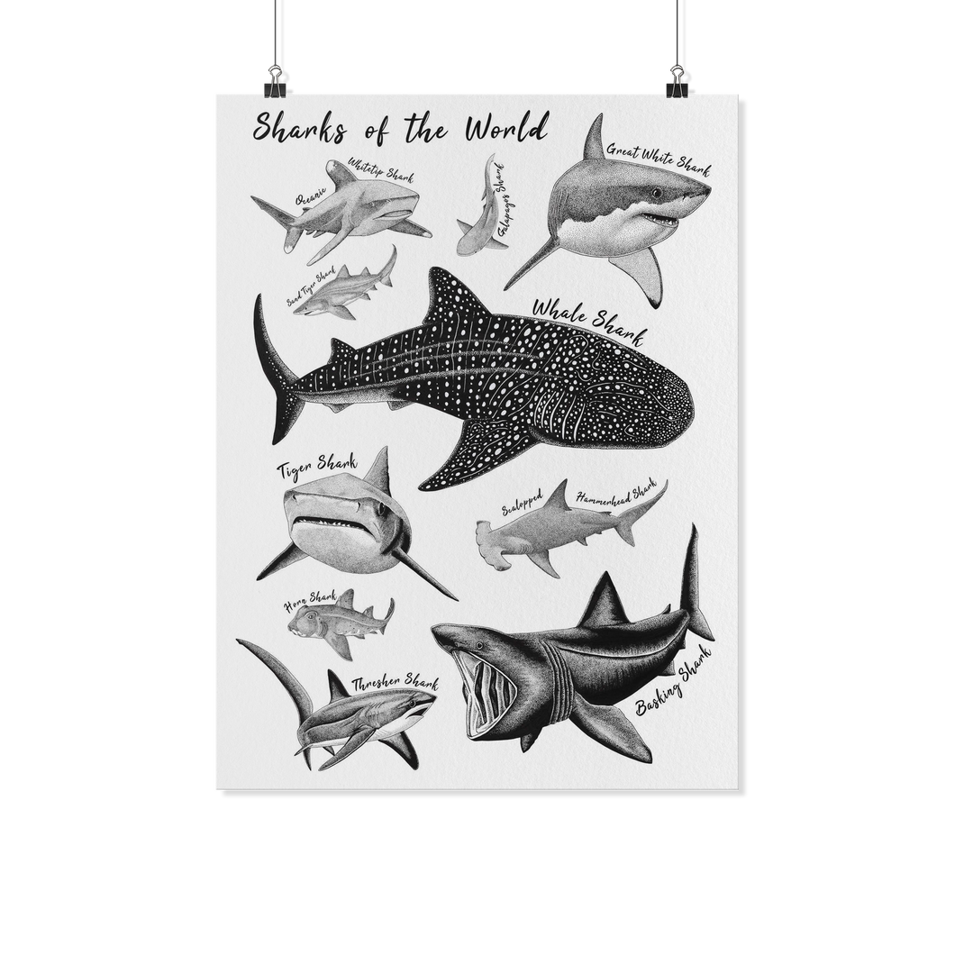 Sharks of the World Poster Print