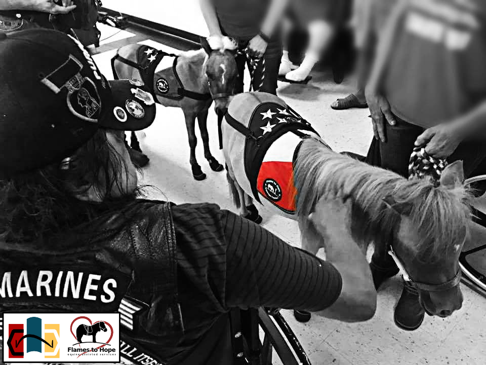 Flames to Hope equine assisted services - mini horse and veteran