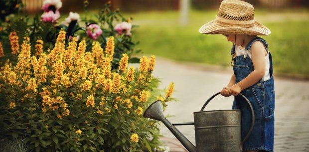 Manage Your Garden in a Heatwave - Cornwall Garden Shop