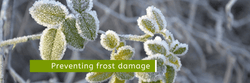 How to Prevent Frost from Damaging Your Plants