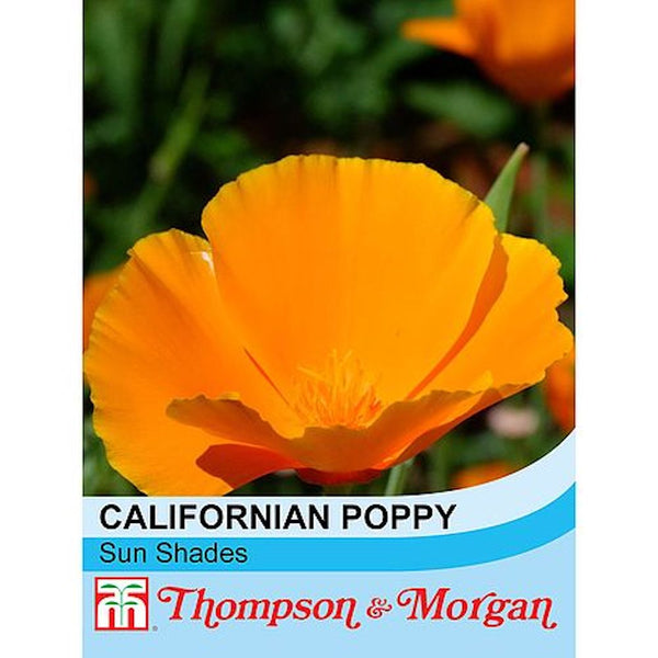 Californian Poppy Sun Shades Flower Seeds