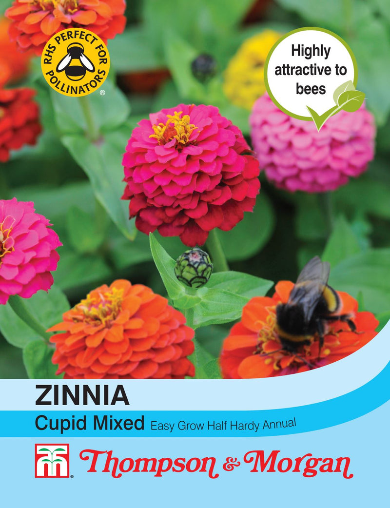 Zinnia Cupid Mixed