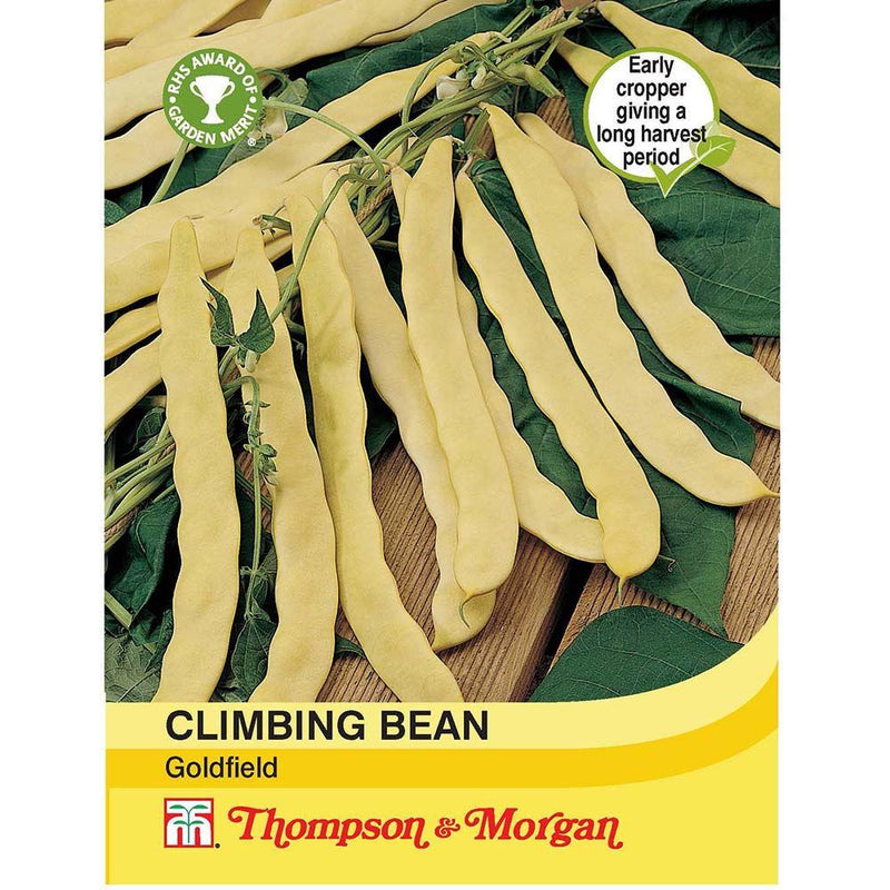 Climbing Bean Goldfield Seeds