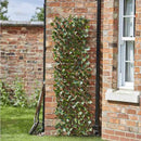 Trellis Maple Leaf Expanding Willow 180 x 60cm