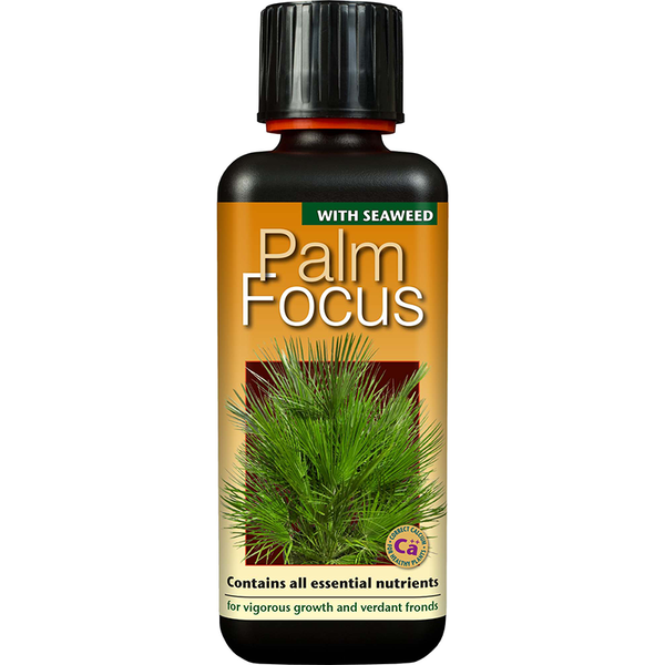 Palm Focus Concentrate 300ml