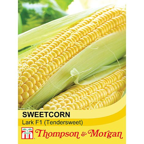 Thompson & Morgan Sweetcorn Lark F1