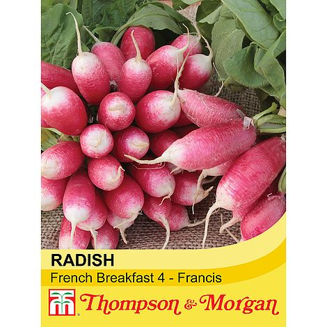 Radish French Breakfast 4 Francis Seeds