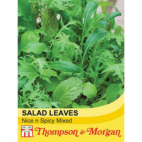 Thompson & Morgan Salad Leaves Nice n Spicy Mixed