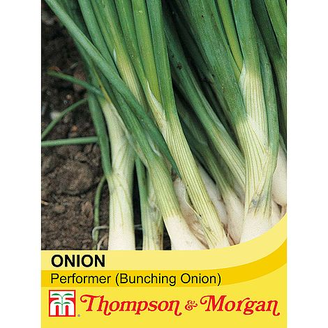 Spring Onion Performer Seeds
