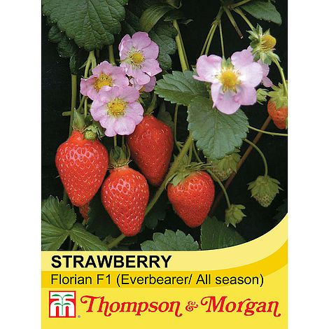 Strawberry Florian F1 Seeds