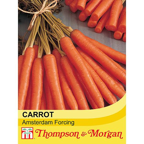 Carrot Amsterdam Forcing 3 Seeds