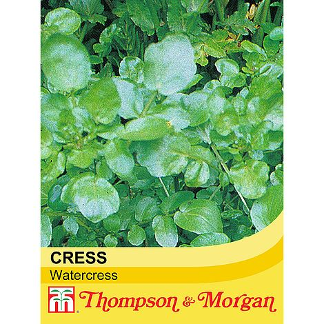 Thompson & Morgan Cress (Watercress) Seeds