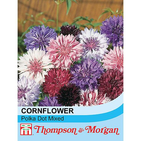 Cornflower Polka Dot Mixed Flower Seeds