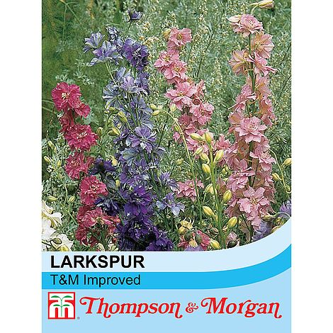 Larkspur T&M Improved Mixed