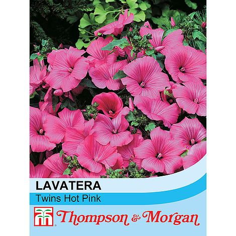 Lavatera Twins Hot Pink Flower Seeds