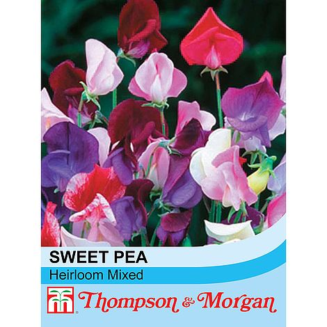 Sweet Pea Heirloom Mix Flower Seeds