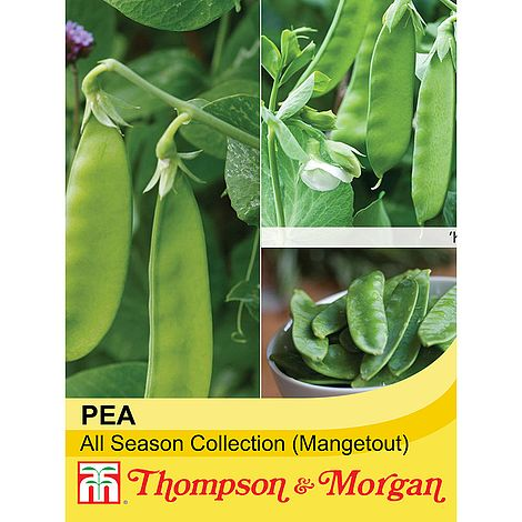 Mangetout Pea Mix All Season Collection Seeds