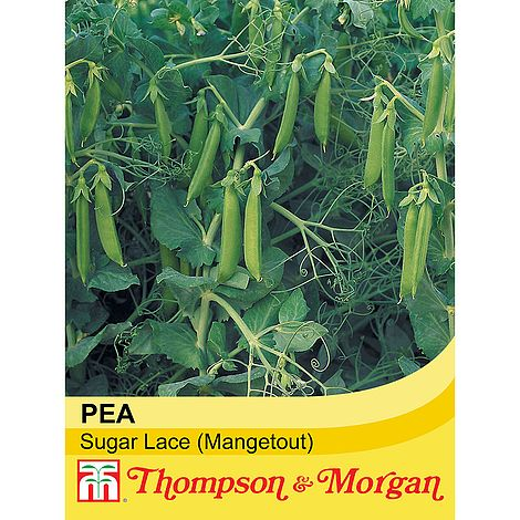 Mangetout Pea Sugar Lace Seeds