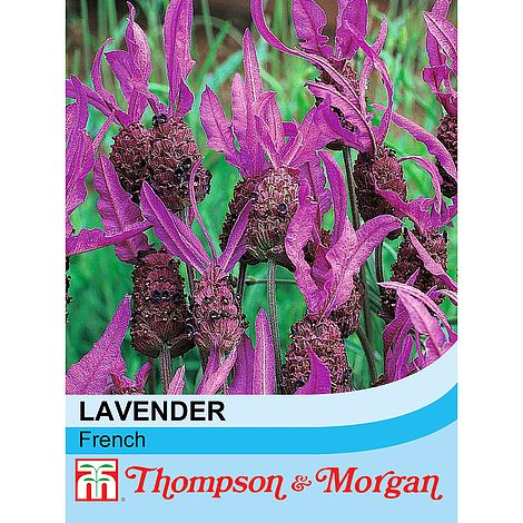 Lavender French Flower Seeds