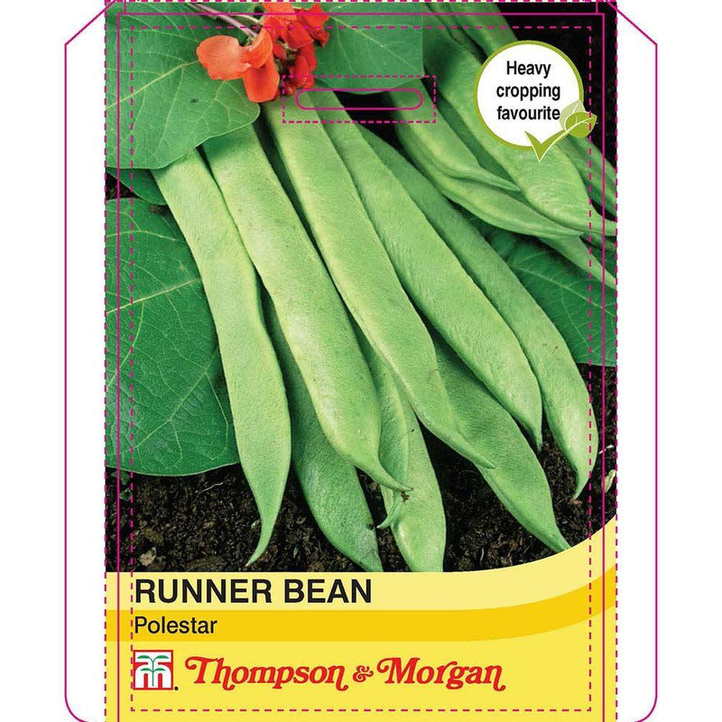 Thompson & Morgan Runner Bean Polestar