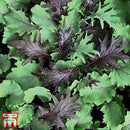 Thompson & Morgan Kale Babyleaf Mix