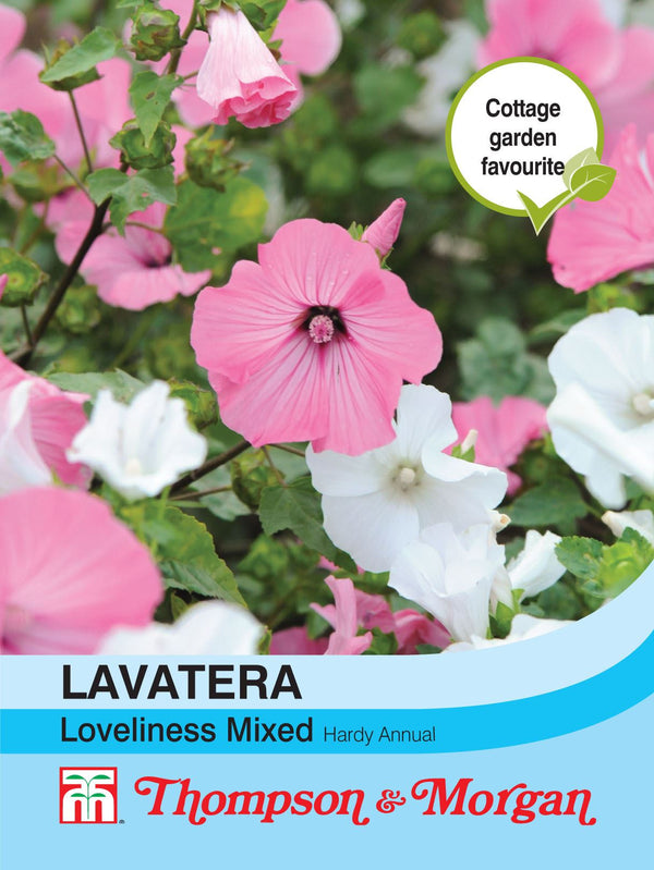 Lavatera Loveliness Mixed Flower Seeds