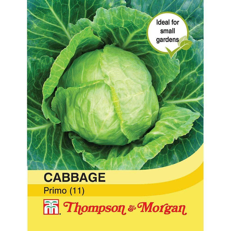 Cabbage Primo (11) Seeds