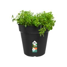 Green Basics Growpot 11cm LIVING BLACK