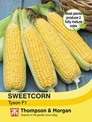 Sweetcorn Tyson Seeds
