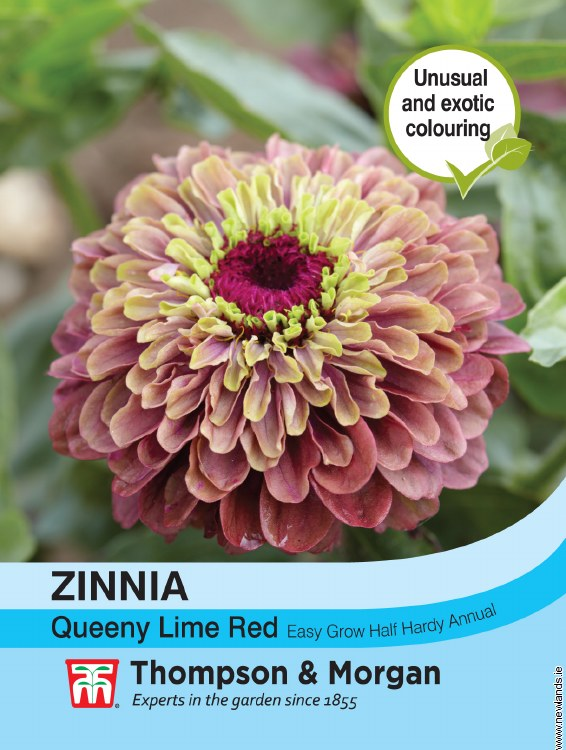 Zinnia Queeny Lime Red