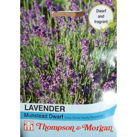 Lavender Munstead Dwarf Flower Seeds