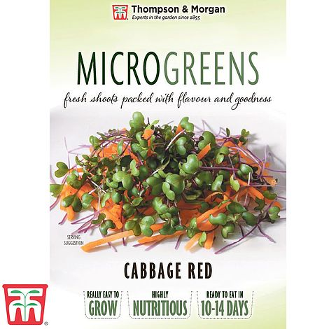 Microgreens Cabbage Red Seeds